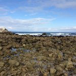 Rocky beaches of Pacific Grove with great mud pools.