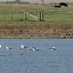 Gulls on the Loch