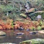 Site Corot