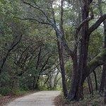 Trail beginning