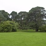 Huge rhododendron bushes and trees of Muckross gardens.