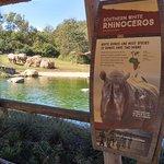 Covered bridge to view Rhinoceros herd