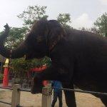 Photo of Phuket Zoo