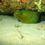 ภาพถ่ายของ JADS Dive Center