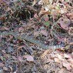 Rattlesnake (Don't be afraid.. Be Careful!)