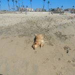 Sand surf'n