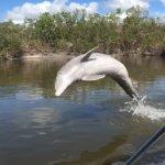 Zdjęcie Everglades Day Safari