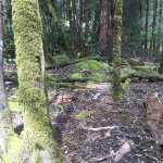 moss covered trees everywhere