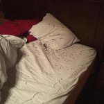Our Bed that would have hundreds of lady bugs in it daily.