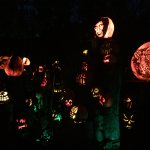 View of the start of the trail with pumpkins lighted