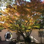 Autumn leaves on full display in an inner courtyard.