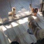 Photo de KETAWA Pet Friendly Hotel