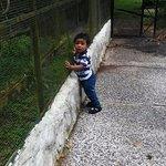 mi hijo mirando a los animales