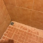 Bugs, mold, and cracked grout