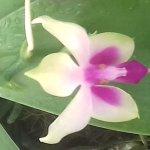 Photo of Sarawak Orchid Garden