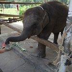 Photo of Ban Chang Thai - Elephant Camp