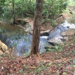 The creek that meanders through the whole property