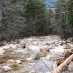 One of the many streams that flows near the Kancamagus Highway