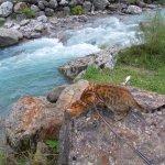 rivières au son hypnotisant