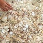Shells & Sand - val3_dublin : Instagram