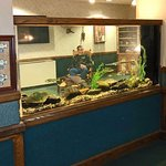 Freshwater aquarium stocked with local fish.