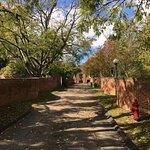wavy garden walls