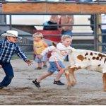 The kids loved the calf scramble