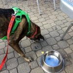 The wonderful staff of Pi-Squared Pizza provided Snickers with dog bones and a bowl of water.