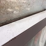 thick black mould on the windows