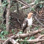 Photo of Mahoora Tented Safari Camp Wilpattu