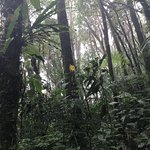Photo de Monteverde Cloud Forest Biological Reserve