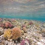 Foto de Ratu Kini's Backpackers and Dive Resort