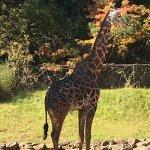 Giraffes, lions, leopards, snakes, monkeys and lemurs...so fun!