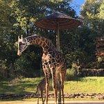 Giraffes, lions, leopards, monkeys, snakes and lemurs... so fun!