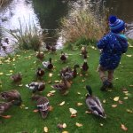 Loved the ducks at the pond