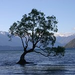 The famous Wanaka tree just a short walk!