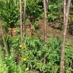 Chelsea Physic Garden Plants