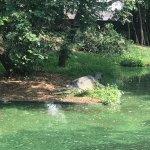 MadrasCrocodileBank Foto