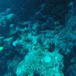 Sinai Divers Backpackers Foto