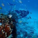 Diving among all the fish on Racha Noi
