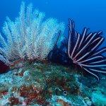 Beautiful reef photos