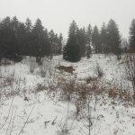 Neige automnale sur le tour du massif de la Chartreuse