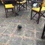 Terrasse envahie de pigeons