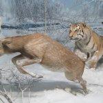 Foto di Civico Museo di Storia Naturale