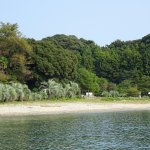 the beach of the island, a view of the park between the trees