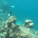 Snorkeling really close to the beach!