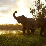 Foto de Anantara Golden Triangle Elephant Camp & Resort