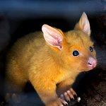 Baby possum - he's so cute