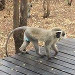 Photo of Mvuradona Safari Lodge