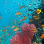 Beautiful fish of the Red Sea